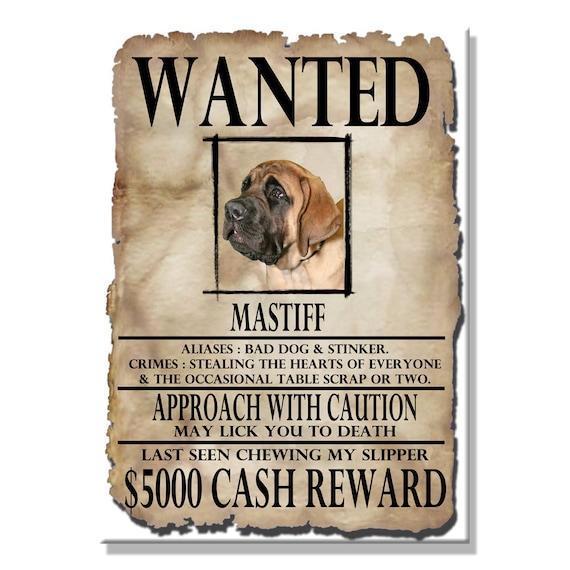 Mastiff Wanted Poster Fridge Magnet