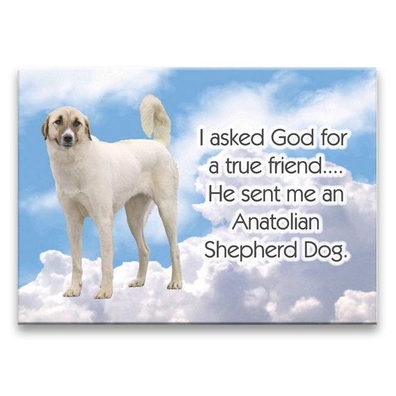 Anatolian Shepherd True Friend Fridge Magnet