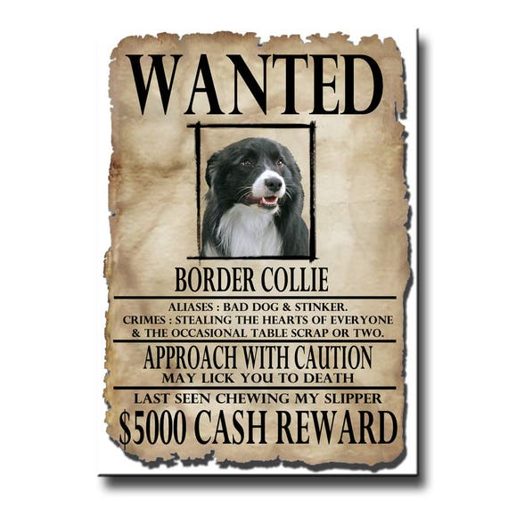Border Collie Wanted Poster Fridge Magnet No 1