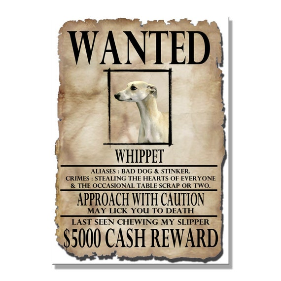 Whippet Wanted Poster Fridge Magnet