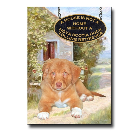Nova Scotia Duck Tolling Retriever a House is Not a Home Fridge Magnet