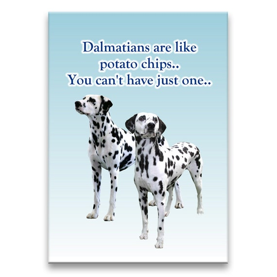 Dalmatian Can't Have Just One Fridge Magnet