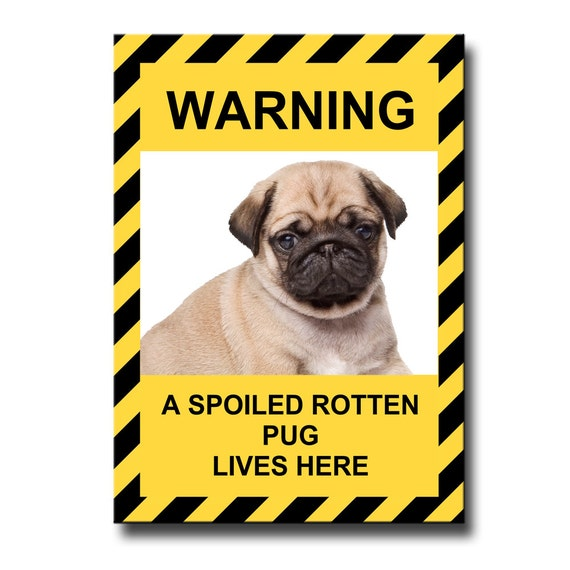 Pug Spoiled Rotten Fridge Magnet No 3 Puppy Fawn