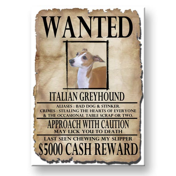 Italian Greyhound Wanted Poster Fridge Magnet