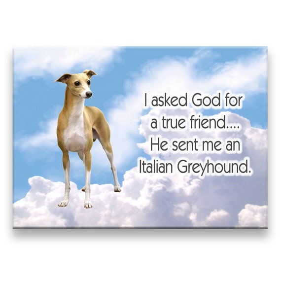 Italian Greyhound True Friend Fridge Magnet
