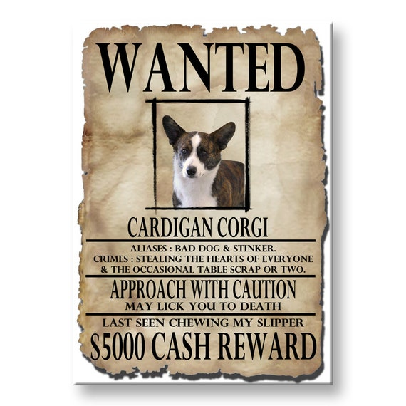 Cardigan Corgi Wanted Poster Fridge Magnet