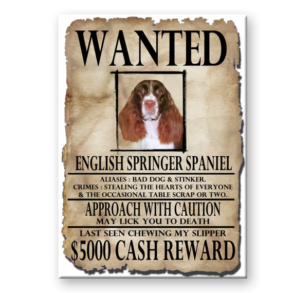English Springer Spaniel Wanted Poster Fridge Magnet No 2