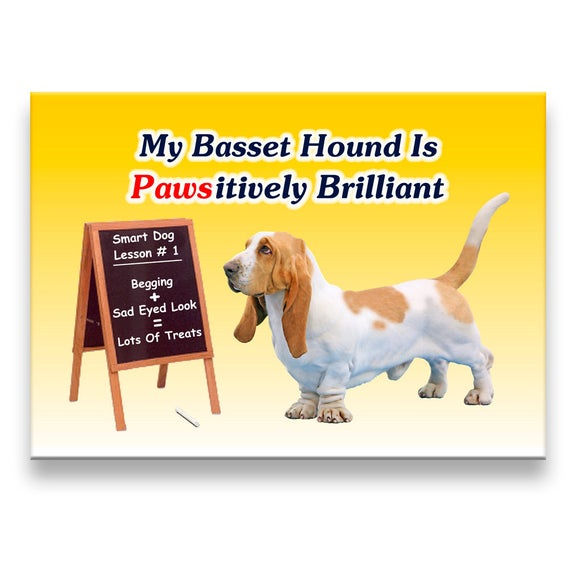Basset Hound Pawsitively Brilliant Fridge Magnet No 1