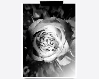 Rose print etsy rose print black and white art flowers print rose printable rose photograph photography print white rose art white flowers art roses mightylinksfo