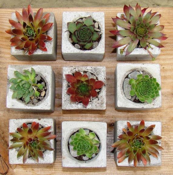 Mini Succulents Succulent Wedding Favour Mini Succulent Etsy