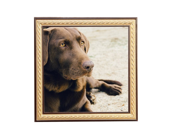 Lg Gold leaf with Green Panel Antique Picture Frame Gold Frame Decor Sizes5x7,8x8,8x10,9x12,10x10,11x14,12x12,12x16,14x18,16x20,18x24,