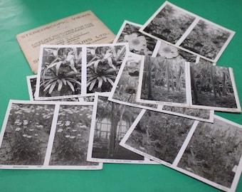 Camerascope Cards Botanical Sunbeam Tours London Uncut + Envelope