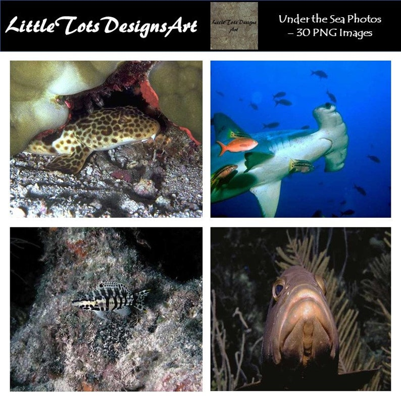 Sea Creature Photography /Under the Sea Photography /Digital Photography  /Wall Art /Sea Creature Photos /Under the Sea Photos