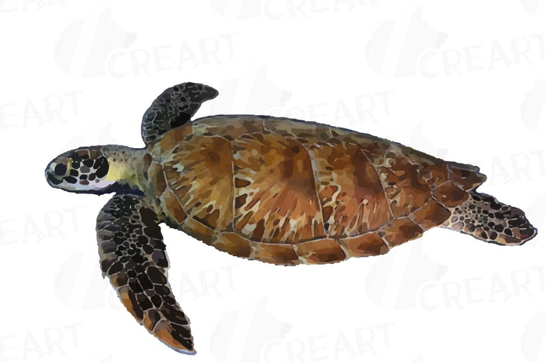 Vector Illustrator Colorful Turtles Tropical Collection Watercolor Sea Turtles Clip Art Pack Png Jpg Pdf Eps Cdr Files Included Svg