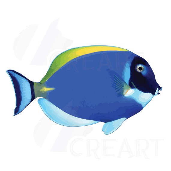 Watecolor Tropical Fish Clip Art 12 Vectors For Commercial Or Personal Use Vector Png Jpgsilhouette Studio And Pdf Files