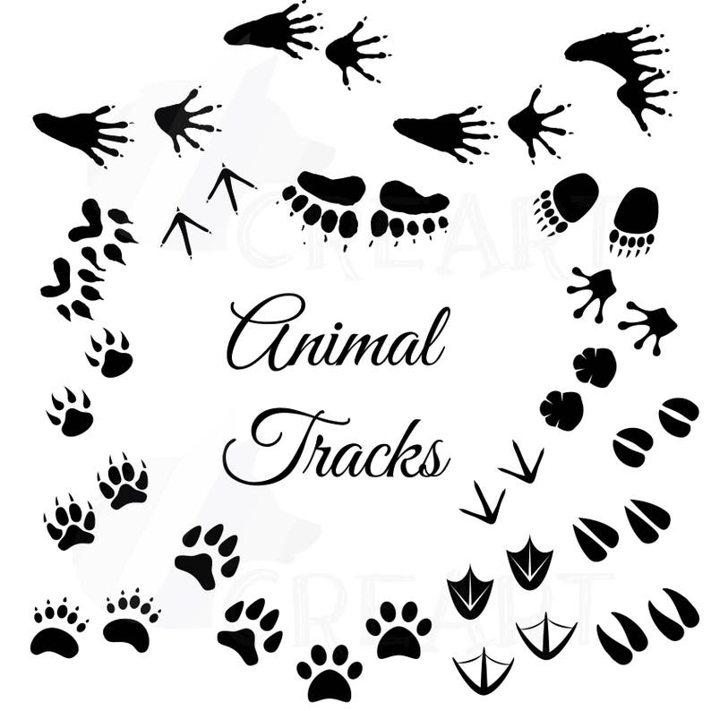 Animal Tracks Woodland Animals Footprints Clipart Pack