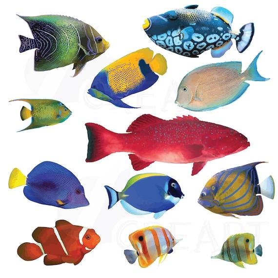 Watecolor Tropical Fish Clip Art 12 Vectors