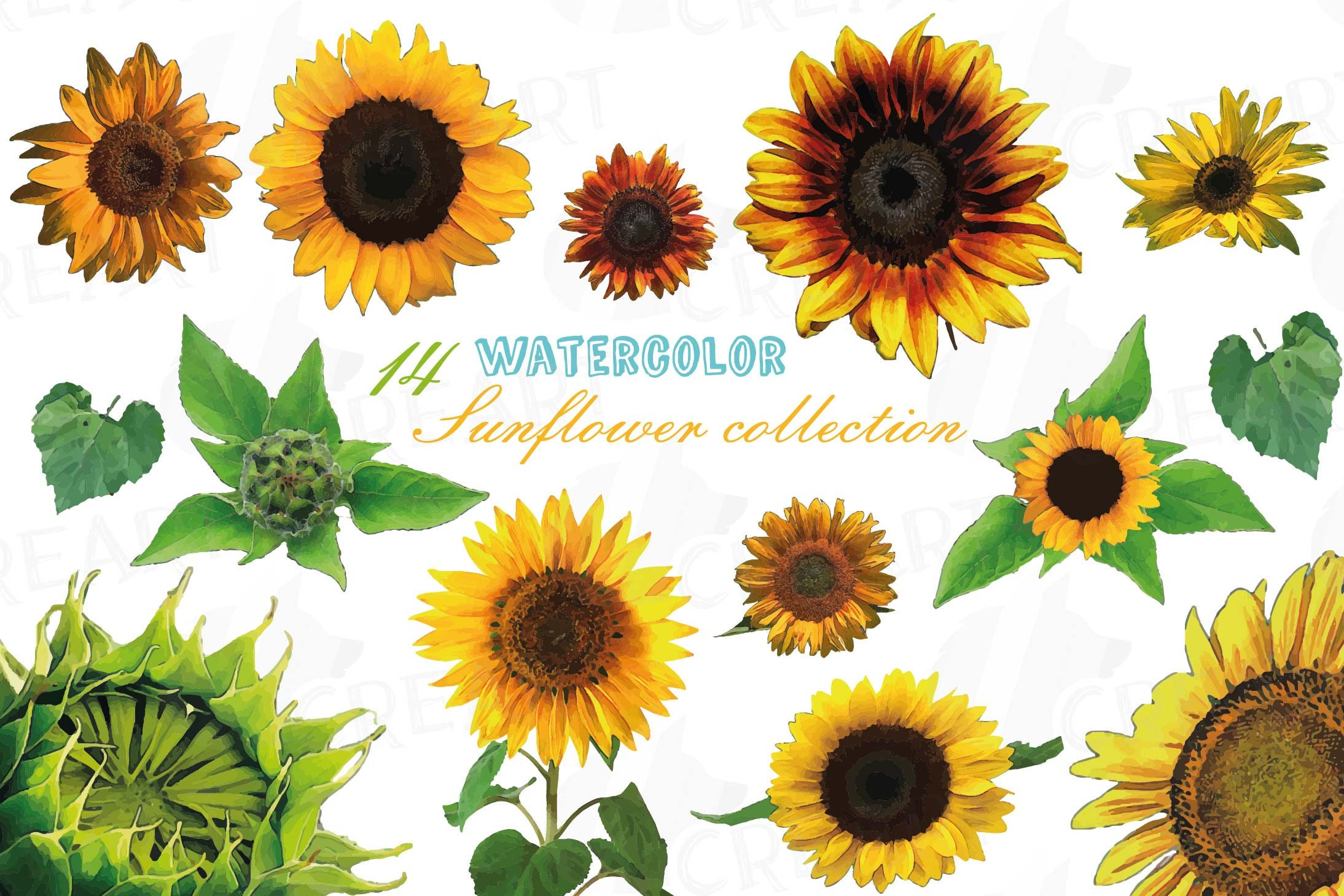 Sunflower watercolor clip art pack watercolor sunflower | Etsy