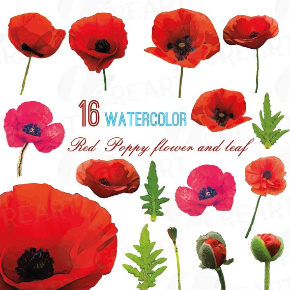 Watercolor Red Poppy Flower And Leaf Clip Art Pack Poppies Etsy