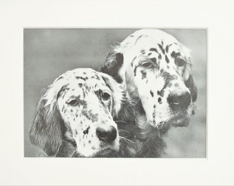 Animal Prints,Dogs,Foxhound,English Setter,JG Wood,Antique,Mixed,Individual,1862