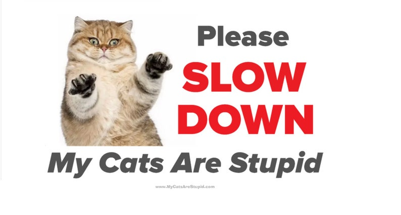 Yard Sign  My Cats Are Stupid image 0