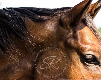 Fine Art Photograph, Brown Horse Head