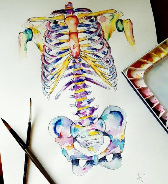 Medizinische Anatomie Kunst Aquarell-Malerei Axial Skelett