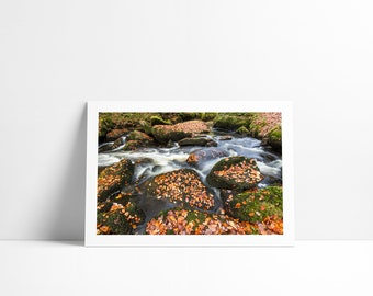 Fall colors #1, Fine Art print signed and numbered