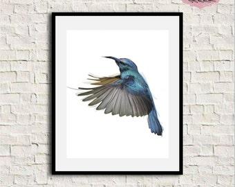 Hummingbird print, Hummingbird art, Hummingbird wall art, Watercolor hummingbird, Bird print, Bird wall decor, Bird print, Printable Artwork