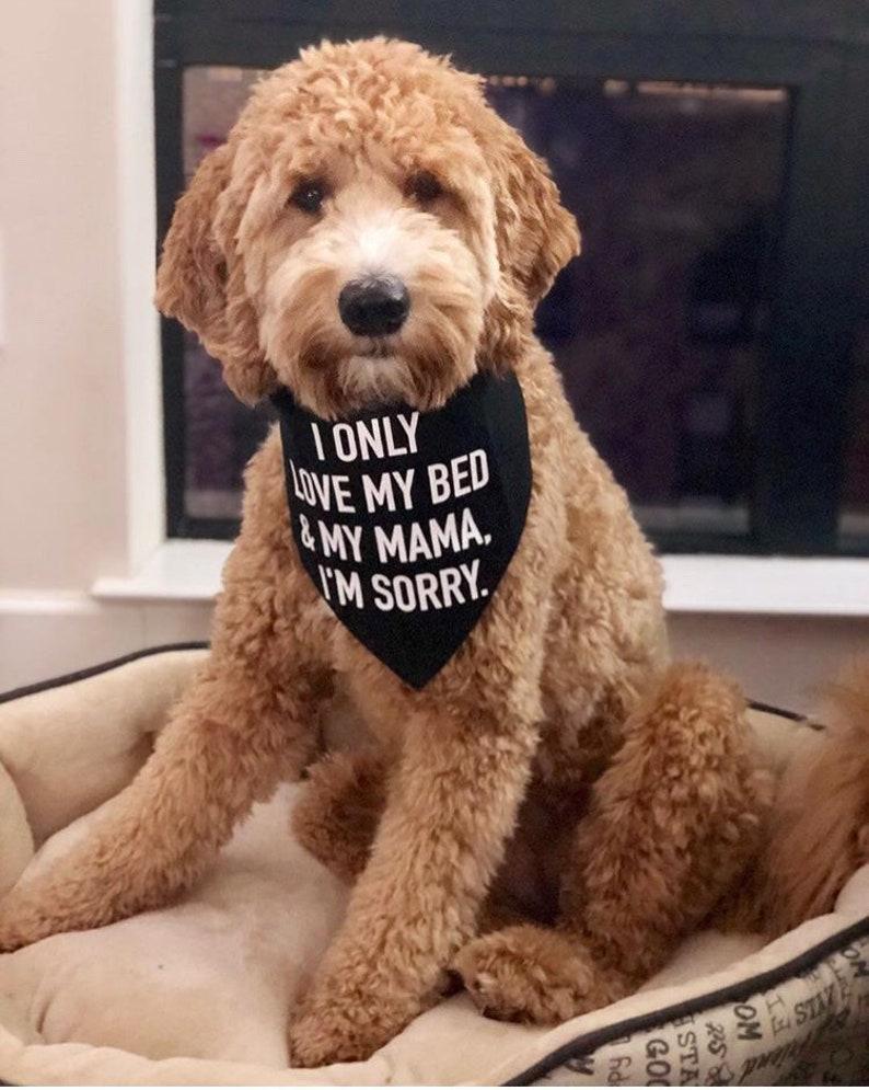 I Only Love My Bed And My Mama I'm Sorry  Dog Bandana image 0