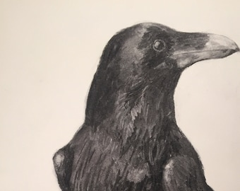 Raven with Turned Head
