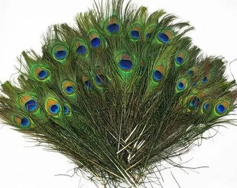 Peacock feather   Etsy