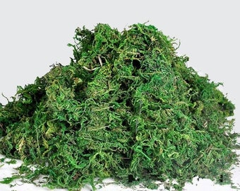 Bulk Live Organic Spanish Moss For Sale- FIVE 5 lb  FREE SHIPPING Craft On!