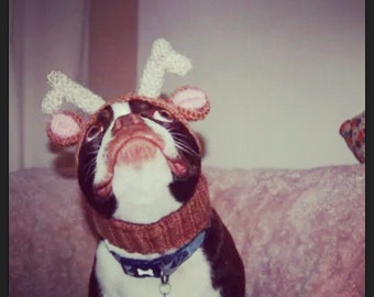 The deer dog, reindeer hat. Christmas hat, snood for your doggie. Pug, french bulldog, greyhound, King Charles spaniel,  boston terrier