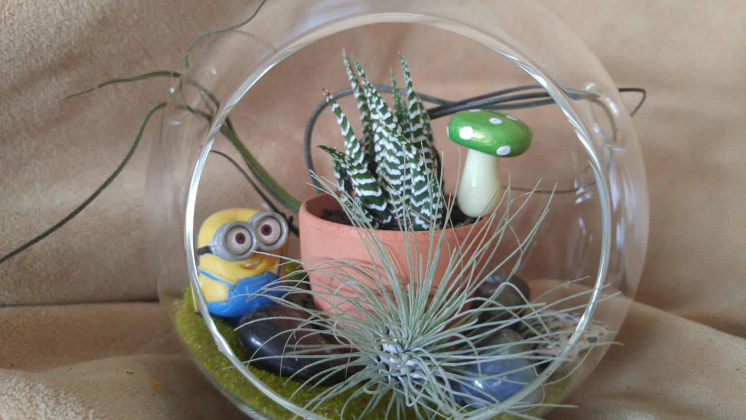 The Minions Terrarium Kit 5 5 Inch Glass Globe Terrarium With Zebra