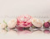 ROSES Digital Backdrop Pr...