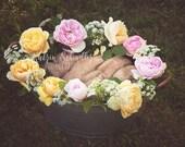 Gardening Roses Flower Ba...