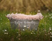 Daisies Gardening Flower ...