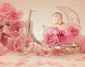 Roses Vintage Bike Velo D...