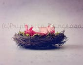 Flower Basket Digital Bac...