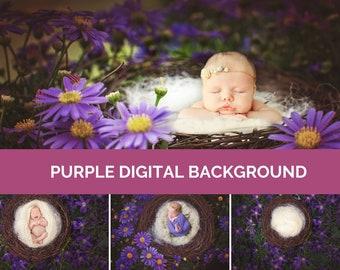 Purple Flowers Digital Photo Background Baby & Newborn Photography Nature Daisies