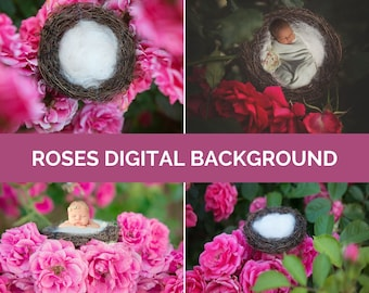 Roses Digital Photo Background Baby & Newborn Photography Pink Red Nature