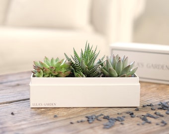 Original Succulent Planter    Succulent Gift Box    Bridesmaid Gift    Thank You Gift    Housewarming Gift