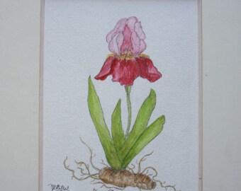 """Crimson Lily"" original watercolor painting"