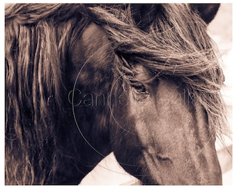 Horse Wall Art Instant Art Downloads Equestrian Cowboy Cowgirl Equine Printable Extra Large Prints  Horse Pictures Sepia Prints Horse Prints