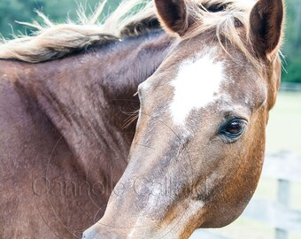 Horse photo, Horse Print, Shop for a cause, Wall art, Equine Art, Western Decor, Donation 30% of the sale
