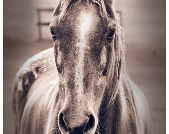 Horse photo, Horse Print, Sepia Photography, Shop for a cause, Wall art, Equine Art, Western Decor