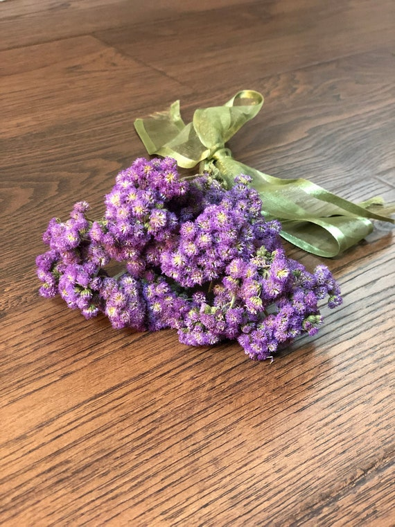 Dried Ageratum Dried Flossflower Dried Purple Ageratum Etsy