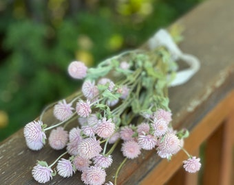 Light Pink Dried Globe Amaranth Bunch, Blush Pink Dried Gomphrena Bunch, Pink Clover Flowers