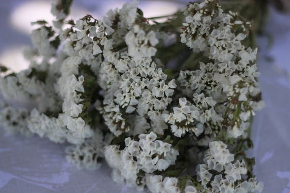 Dried white statice white wedding dried white flower bunch etsy image 0 mightylinksfo